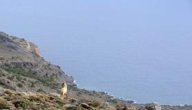 wild goat. Asterousia mountains south Crete