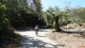 mountain biking through the section with the olives
