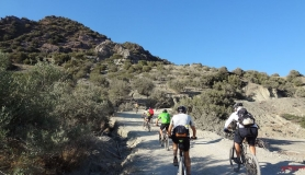 mountain bikers in the olive forest