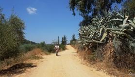 mountain biker on the road to Thrapsano village