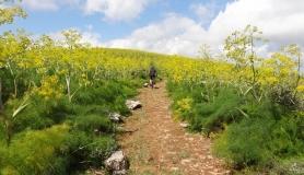 blossom flowers near Agarathos monastery