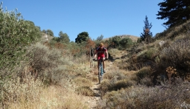 the narrow singletrail through the olives