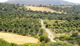 agiofaraggo mountain bike tour Crete mesara olive groves