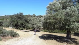 agiofaraggo mountain bike tour Crete olives