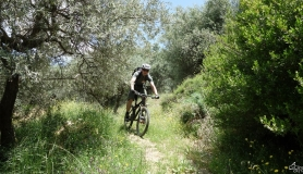 riding through the olives