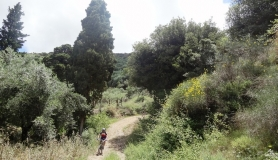 easy downhill section through the olives and cypress trees