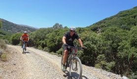 mountain biker at the section with Skinos trees