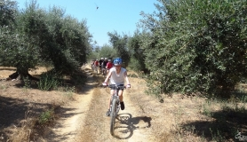 bike ride through the olive trees