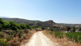 avgerinos Rocca mountainbike tour of Crete green vine yards