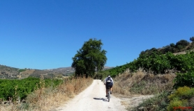 avgerinos Rocca mountainbike tour of Crete oak tre near sinapi village