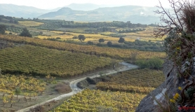 avgerinos Rocca mountainbike tour of Crete the vine yards of Profitis ilias
