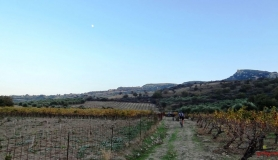 avgerinos Rocca mountainbike tour of Crete vine yards fall