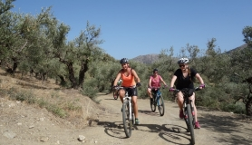 ebike tour hersonisos heraklion Crete Greece olive trees