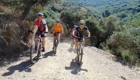the last ascent of the tour through the olives