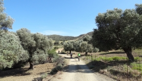 Fences seperate the olive groves from the pastures. Listaros Agiofarago