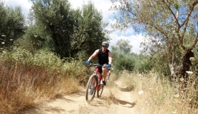 olives and herbs cyclingcreta bike rentals Crete guided tours