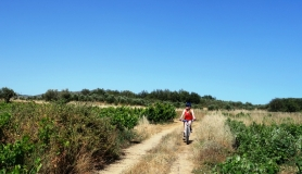 vine yard and lady cyclist cyclingcreta bike rentals Crete guided tours