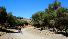 mountain bikers in the olive forest of Agios Savvas crete