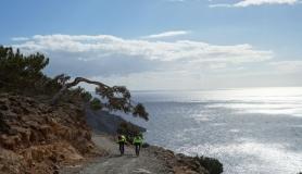 pine tree and cyclists kapetaniana kofinas koudoumas mountain bike tour Crete Kreta