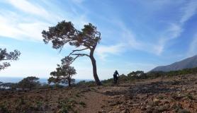 pine tree kapetaniana kofinas koudoumas mountain bike tour Crete Kreta