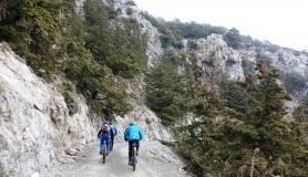 pine trees at the top kapetaniana kofinas koudoumas mountain bike tour Crete Kreta