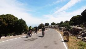donkey engourage cyclists