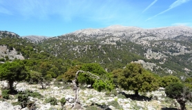 Prinos oak forest of Kritsa