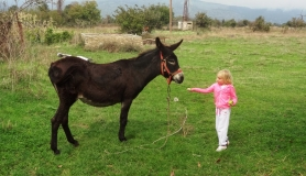 young girl cyclist feeds a donkey at Lasithi Plateau