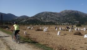farmers collect potatos