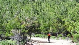 Pine forest of Amiras village - Highlands