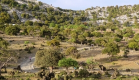 Lapatha plateau - Highlands