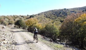 the trees fall their leaves Mitato bike tour Crete