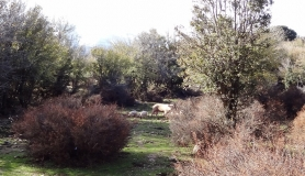 wild pigs at Rousa Limni Mitato bike tour Crete