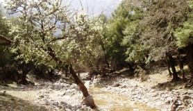 rouvas forest bike tour Crete 15-min