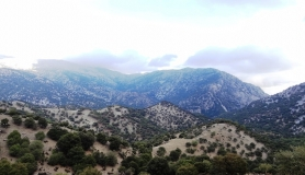 rouvas forest bike tour Crete 4-min