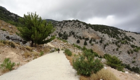 rouvas forest bike tour Crete-min