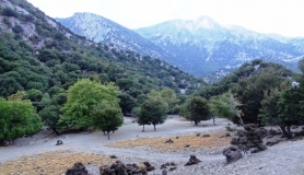 rouvas forest bike tour Crete13-min