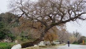 stone village bike tour Agios Thomas kera kardiotissa
