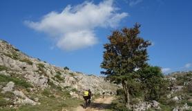mountain bikers next to a holm oak tree