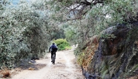 mountain biker ascents through olive groves
