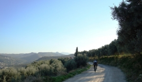 Xerolia mountain bike tour near Heraklion Crete olive trees and cypress