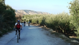 Xerolia mountain bike tour near Heraklion Crete riding through the olives