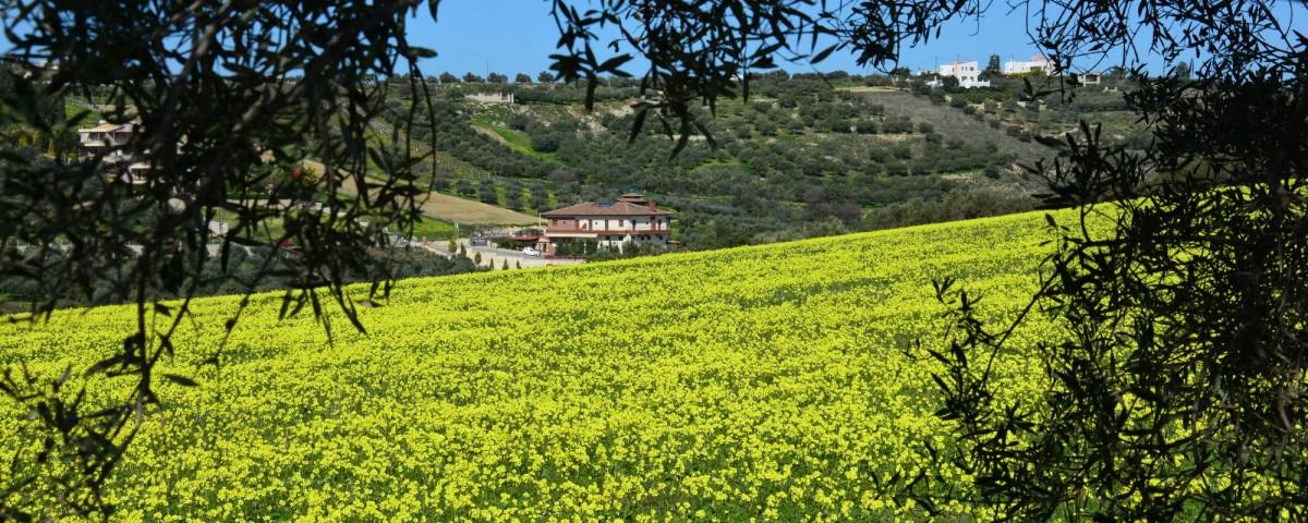 sun-and-nature-in-crete
