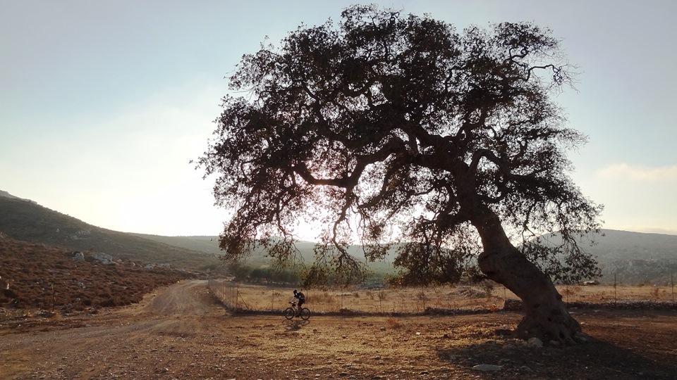 cycling tree authumm