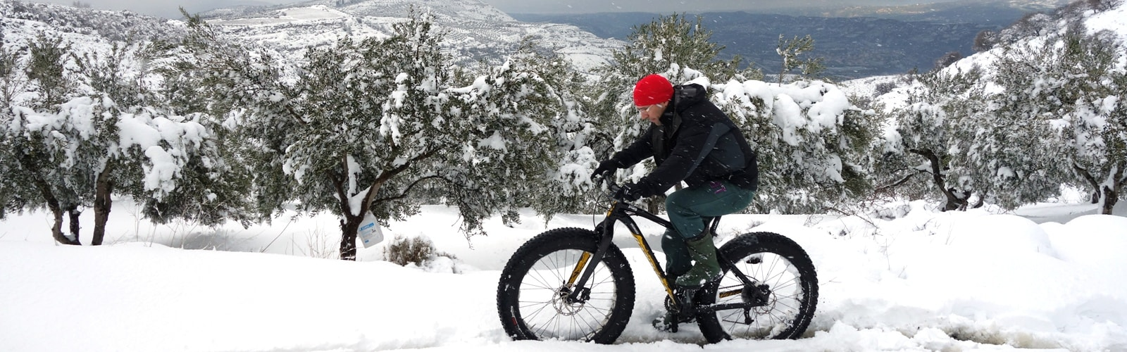 olive-trees-donot-like-snow-an-cold-weather-min