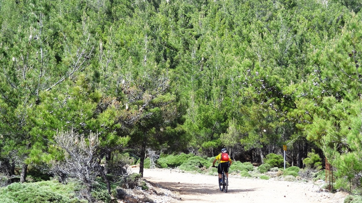 cyclist in a pine forest at south dikti crete