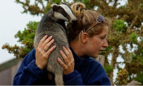 badger-of-crete-arcalus-8-min
