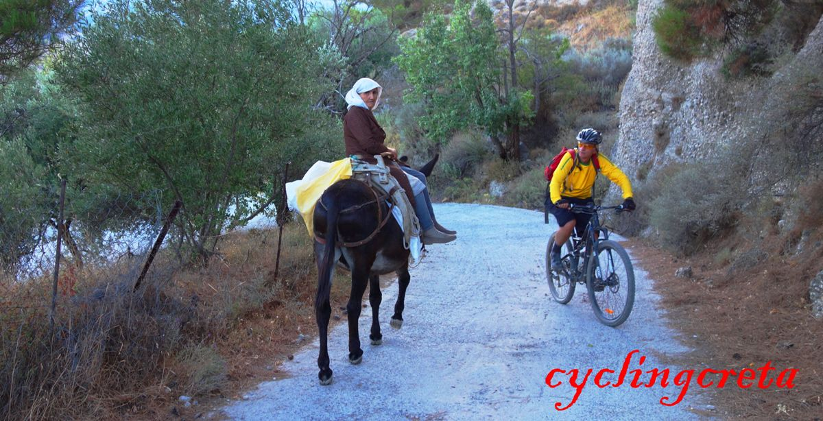 lady rides a donkey at selakano forest Crete cyclist is passing