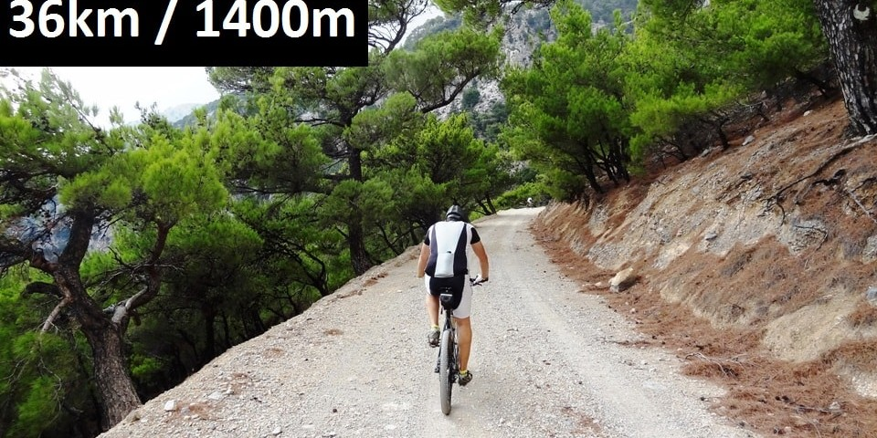 rouvas-forest-feature-image-bike-tour-crete-min