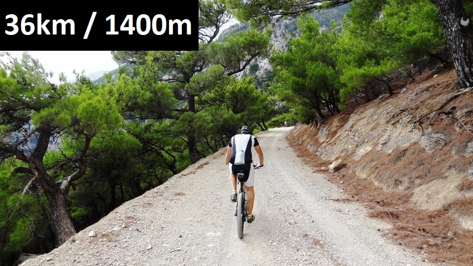 rouvas-forest-feature-image-bike-tour-crete-min